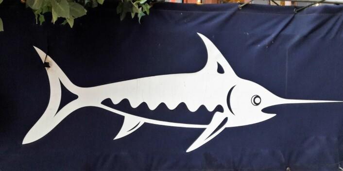 Den flotte sverdfisken til Beach Club forlater snart Aker Brygge. Foto: Andes Høilund