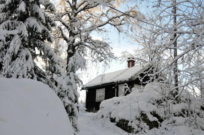 Vi gjetter at de laftede hyttene er blant de eldste på Nosa. Alle hyttene har stedsnavn. Oscarsborg og Strandheim, for eksempel. Foto: Katja Johanne Pihl