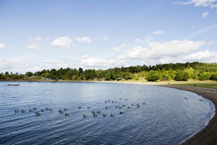 Oslos gamle miljøsynder utgjør også en fare for fugle- og dyrelivet i Bunnefjorden. Nå er det opp til Miljødirektoratet å avgjøre om kommunens oppryddingsplaner er forsvarlige å gjennomføre. Foto: Vegard Wivestad Grøtt / NTB scanpix