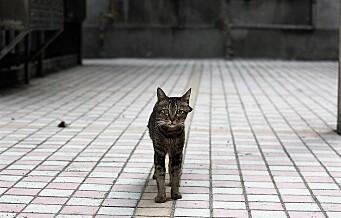 – Mattilsynet møter en alvorlig sak om mislighold av et dyr med å hytte pekefingeren mot oss som varsler