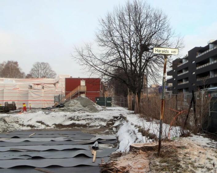 Bare stubben står igjen av treet på hjørnet at Haralds vei og Hovinveien. Gravearbeider ødela røttene til treet. Foto: Anders Høilund