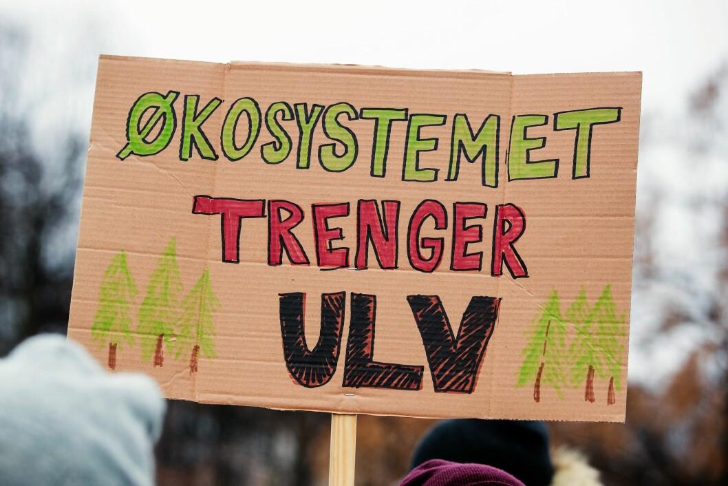 Dyrerettighetsorganisasjonen NOAH arrangerer demonstrasjon mot felling av ulv. Arrangementet holdes på Eidsvolls plass foran Stortinget i Oslo lørdag ettermiddag. Foto: Håkon Mosvold Larsen / NTB scanpix