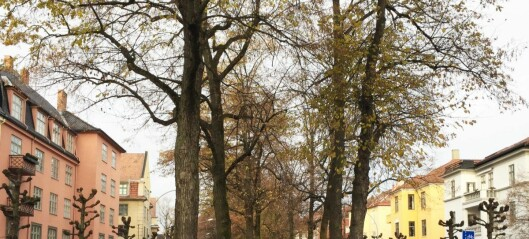 — Sykkeltilrettelegging på Frogner har vært trenert mer enn lenge nok. Sykkelfelt i Gyldenløves gate nå!