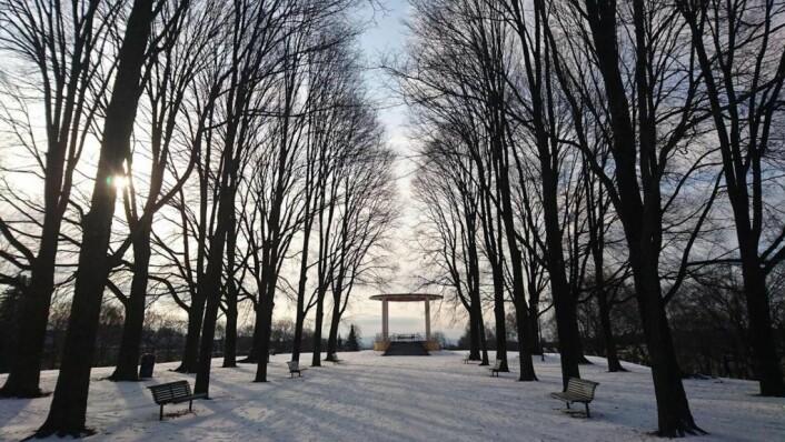 En landskapsarkitekt må tenke langt framover og ta hensyn til klima. Etter hundre år, har trærne i Torshovparken vokst seg store og staselige. Arkitekter var Marius Røhne og Eyvind Strøm. Foto: Kristian Haugnes