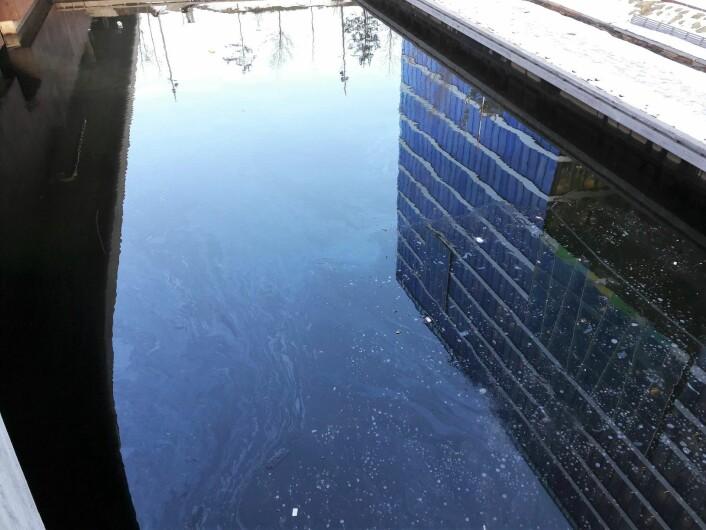 Nok en gang kan flere tusen liter fyringsolje være lekket ut i Akerselva. Foto: Anders Høilund
