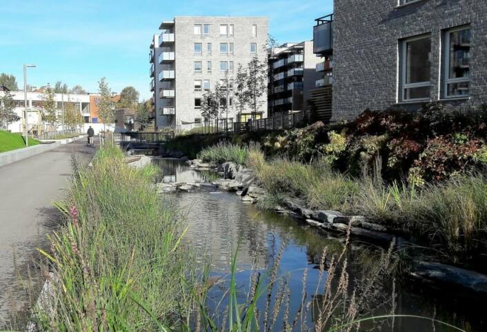 Den delen av Hovinbekken som renner gjennom bebyggelsen på Ensjø, klarte seg unna forurensningen denne gangen. Foto: Anders Høilund