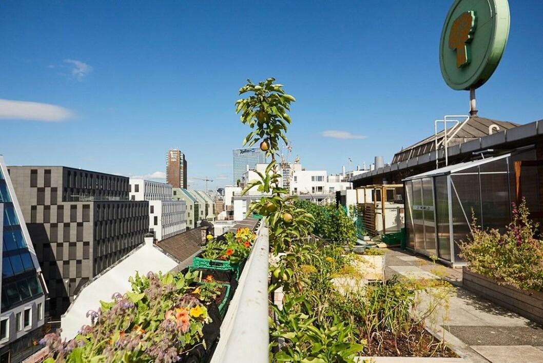 På dette taket i Schweigaards gate fins det både bikuber og en hønsegård. I tillegg til kasser på kasser med nyttevekster. Foto: Mandel & Sesam