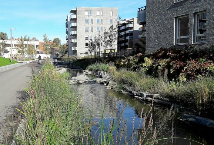 Hovinbekken klukker nå gjennom bebyggelsen på Ensjø og Hasle. I vannet svømmer ørret og røye. Foto: Anders Høilund