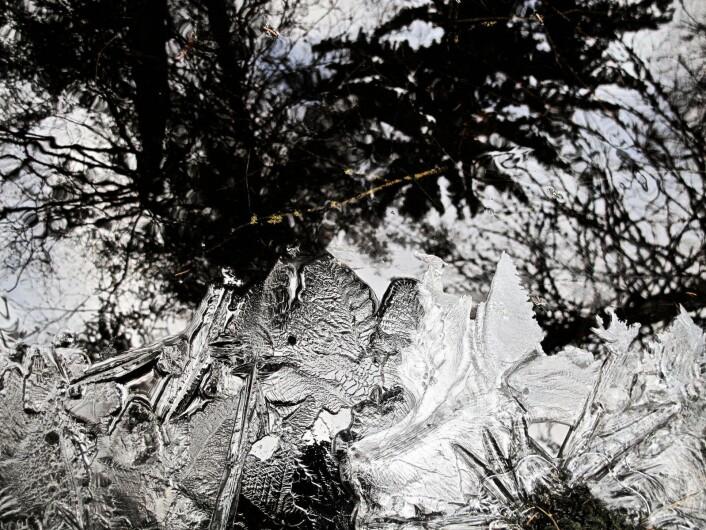 Bekken bød på vaskeekte isroser, skapt i nattens løp. De kan ikke plukkes, ikke settes i en vase, de kan ikke blomstre annet enn akkurat her, slik vannet har skapt dem. I sin flyktighet reflekterer de årtusener med vintre. Foto: Katja Johanne Pihl