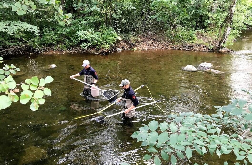 Forskere fra NIVA fisker med el-apparat i Akerselva. Foto: NIVA