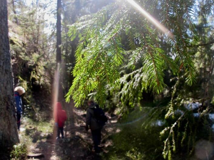 Vi vandret hjemover på en blåmerka sti. Foto: Søstrene Pihl