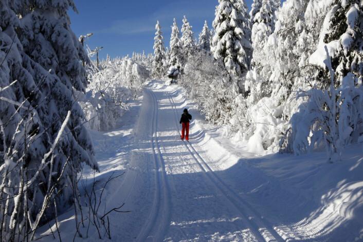 Storbyen Oslo kan hver vinter lokke med milevis av skiløyper i Nordmarka, Østmarka, Sørmarka og Lillomarka. I tillegg er det gode muligheter for både alpint og snowboard i hovedstaden. Foto: Lise Åserud / SCANPIX