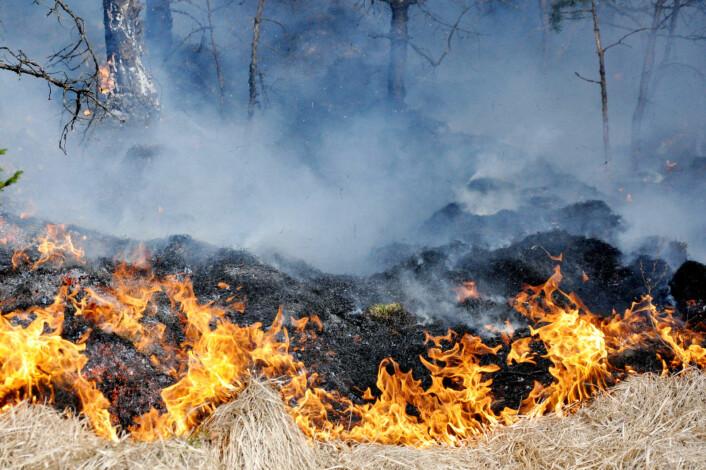 Brannvesenet rykket mandag ettermiddag ut til fire ulike gressbranner i hovedstaden, henholdsvis ved Skøyenåsen skole, Vestli T-banestasjon, Grorud T-banestasjon og ved Sagene. Arkivfoto: Jørn Bærheim / Scanpix