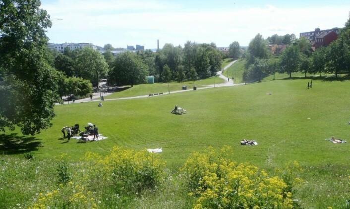 De store plenene ved Myraløkka fylles gradvis opp av solbadere på varme sommerdager. Foto: Anders Høilund