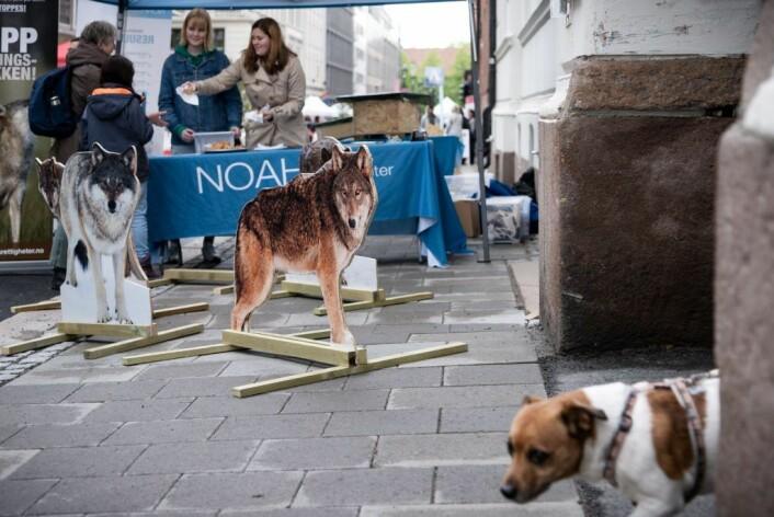 Kanskje følte hunden seg litt underlegen da den oppdaget NOAHs ulveflokk i Dronningens gate. Foto: Bjørnar Morønning