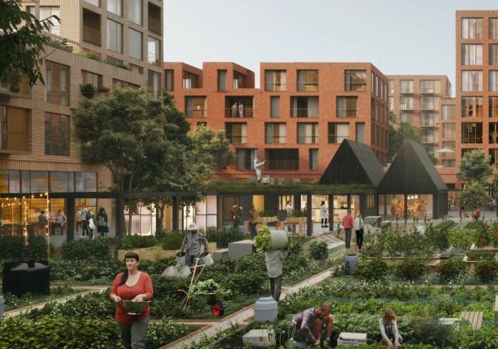 Illustrasjonsbilde av boligprosjektet (som heter 9.4), med parsellhager og felleshus i midten. Illustrasjon: Dyrvik Arkitekter / Transborder Studio / OBOS