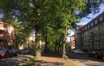 Bystyret vedtok bygging av sykkelvei i Gyldenløves gate. Kan komme allerede i sommer