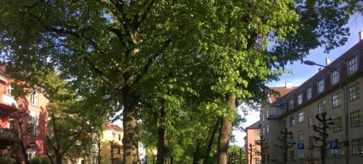 – Gyldenløves gate skal ikke lenger okkuperes av parkerte biler. Det kan hele bydelen være stolt av
