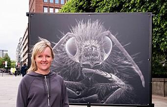 Lyst til å se insekter i menneskestørrelse? På Rådhusplassen kan du møte insektene ansikt til ansikt