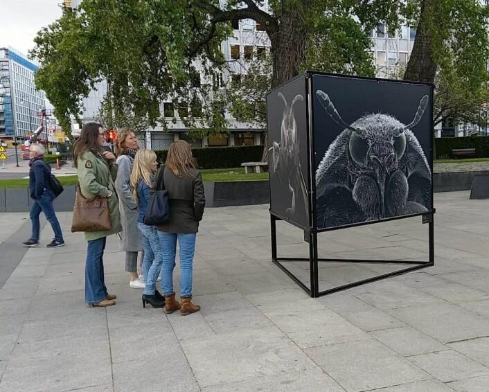 Frem til midten av juni kan du se ansikter i menneskestørrelse på Rådhusplassen. Foto: April Stilley