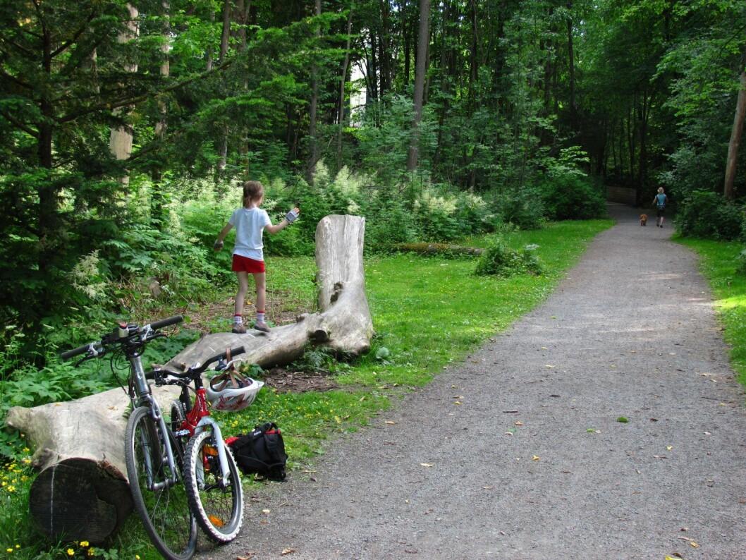 En av de sju grønne sykkelrutene i Oslo går langs Frognerbekken. Lommeguide til alle de sju rutene kan lastes rett ned på mobilen fra egne sider laget av Syklistenes landsforening. Foto: Øyvind Wold / Syklistenes Landsforening
