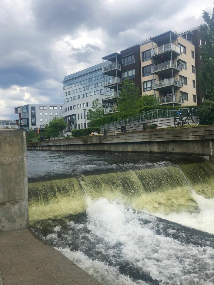 Før flomregnet i går gikk strømmen kraftig i Akerselva. Kan kommunen ha sluppet ut ekstra mye vann fra magasinet i påvente av regnet? Foto: Kaja Sandsdalen