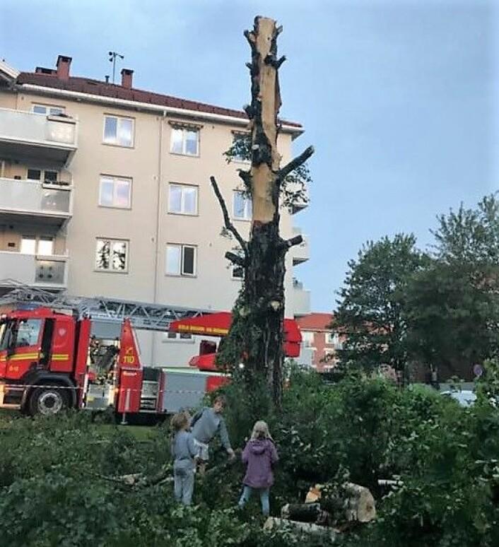 Treet fikk så store skader at brannvesenet fant det tryggest å hogge det ned. Foto: Henriette Sæbø
