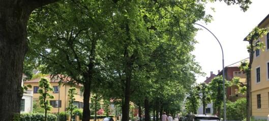 – De grønne skaper en gråere by. I vårt sameie forsvinner deler av forhagen, hekk og syrintrær