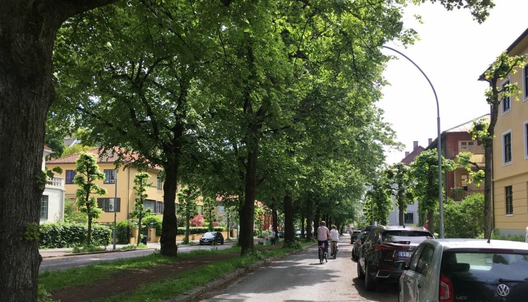 Bystyret vedtok for snart ett år siden at det skulle lages sykkelveier i Gyldenløves gate. Arbeidene skulle begynt i fjor, men det skjedde ikke.