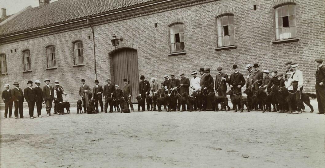 Hundeutstilling på Kontraskjæret, ca. 1910. Foto: Thorkel Thorkelsen / Oslo Museum