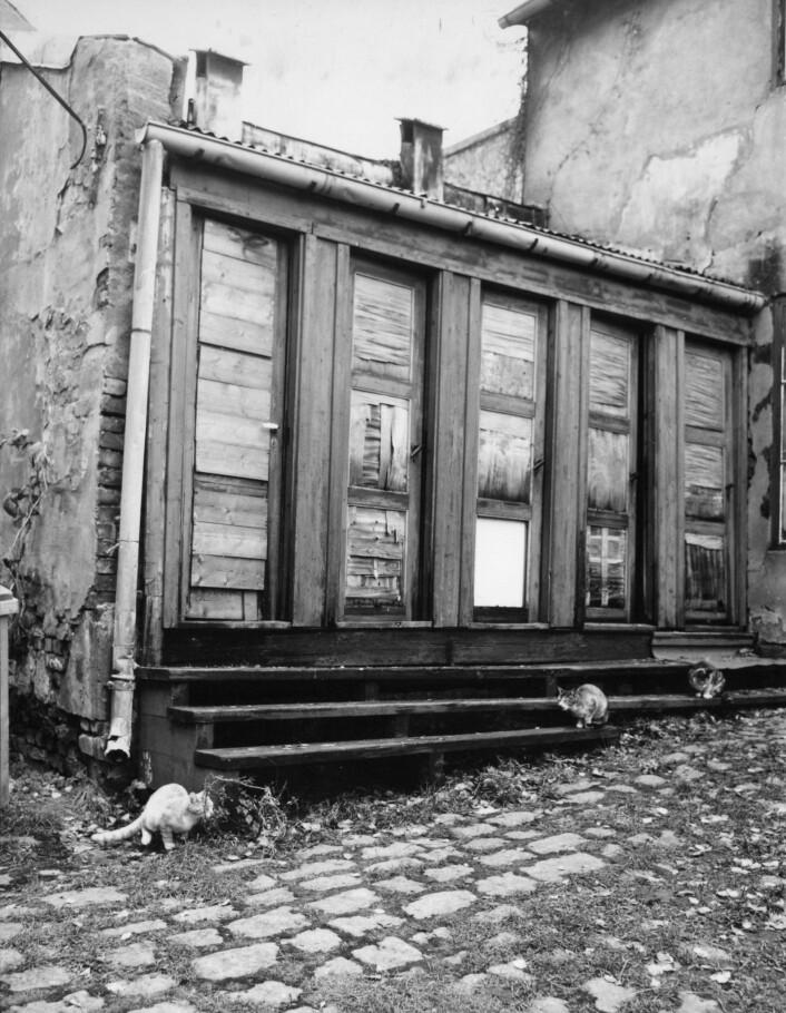 Lenge har katter gått fritt i byen, mens det de siste årene er blitt mer vanlig med «innekatter». Her er bakgårdskatter i Kongsberggata 16 på Bjølsen, 1974. Foto: Harald Waagard / Oslo Museum