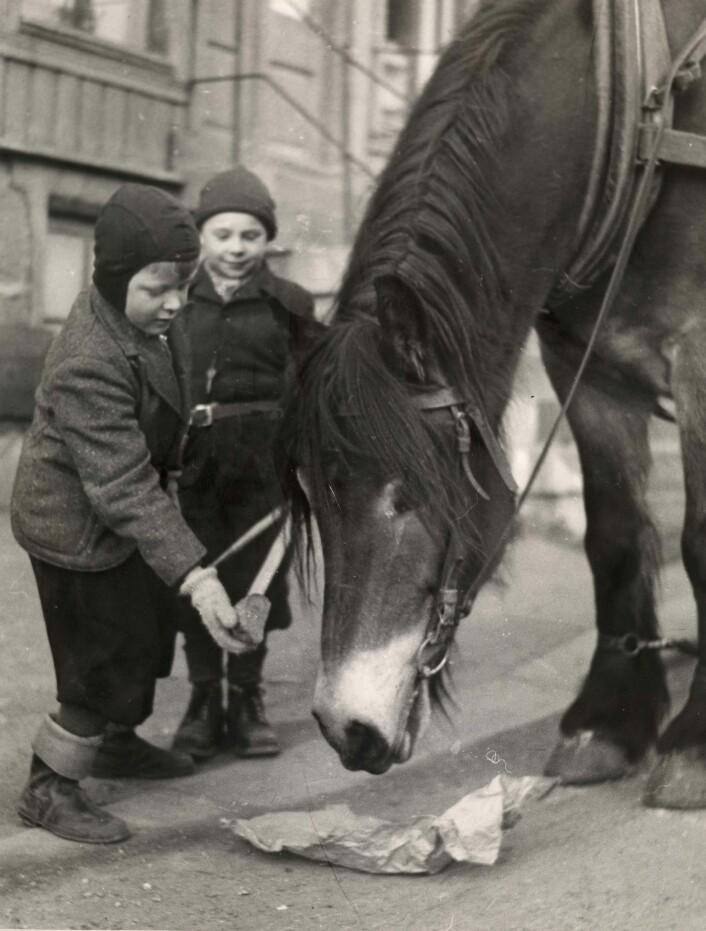 Mange barn hadde et nært forhold til byens hester. Her får en av dem en brødbit en gang på 1950-tallet. Ukjent fotograf / Oslo Museum