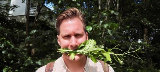 Kokk og sanker Jørgen Ravneberg har laget gastronomisk guide til byens grønne og aller villeste gatekjøkken