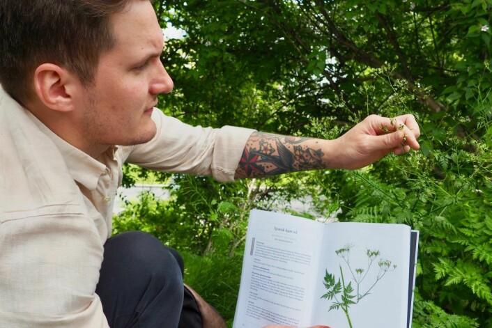 Noen arter er greie å ta en ekstra god titt på. Her viser Jørgen Ravneberg frem en av skjermplantefamiliens medlemmer. Foto: Emilie Pascale