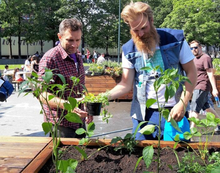 Byråd for miljø og samferdsel, Arild Hermstad (MDG) får hjelp til å plante oregano av Mathias Storm Michelsen. Foto: Stina Maria Lindholm