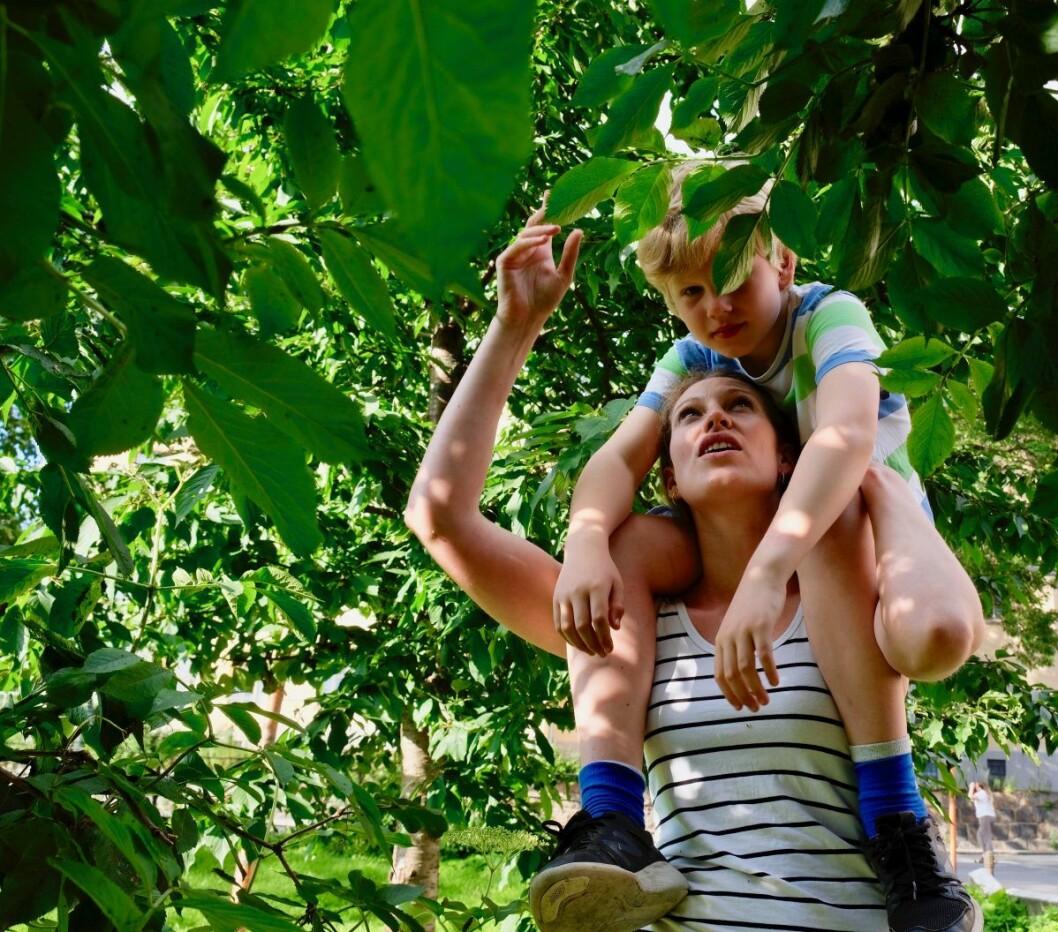 For å få tak i godene, må både små og store være med. Nikolai Huby Vold (8) på skuldrene mamma Sara Huby, gleder seg til å smake på resultatet. Foto: Emilie Pascale