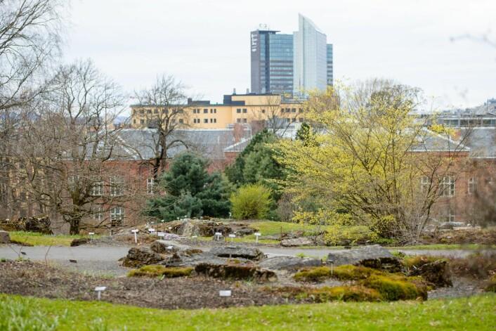 Vårbilde fra fjellhagen i Botanisk hage. Våren hadde såvidt meldt sin ankomst på Tøyen da dette bildet ble tatt. Foto: Audun Braastad / NTB scanpix