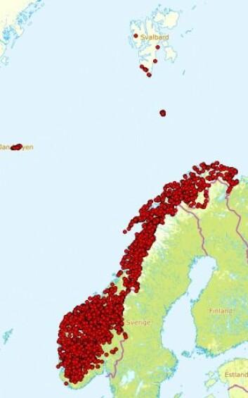 Observasjoner av musøre i Norge. Illustrasjon: Artsdatabanken