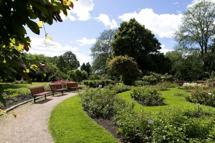 Rosariet ligger i Frognerparken. Et perfekt sted å fri på. Unni Irmelin Kvam / Vigeland-museet