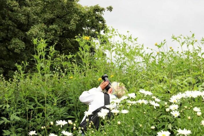 Jakten på det perfekte bildet er et evigvarende prosjekt. Her fra Oslo Kamera Klubbs ekskursjon til Botanisk hage på Tøyen. Foto: André Kjernsli