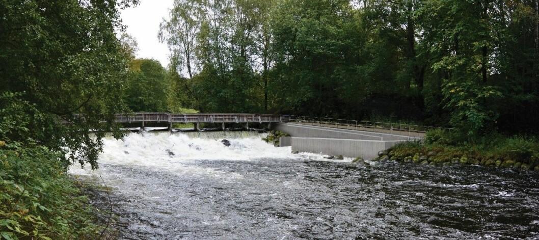 Her ved Grønvoldterskelen i Akerselva begynner fisketrappa å ta form. Planen er at den står ferdig før ørreten gyter i høst. Foto: Bymiljøetaten / Oslo kommune