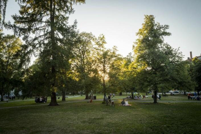 Torshovbekken rant opprinnelig gjennom Sofienbergparkens vestre del. Lenger opp rant bekken i sin tid gjennom Torshovdalen. Foto: Heiko Junge / NTB scanpix