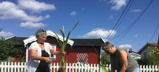 Etter styrtregn og flom kan resten av Oslo lære vannhåndtering av Sogn hagekoloni