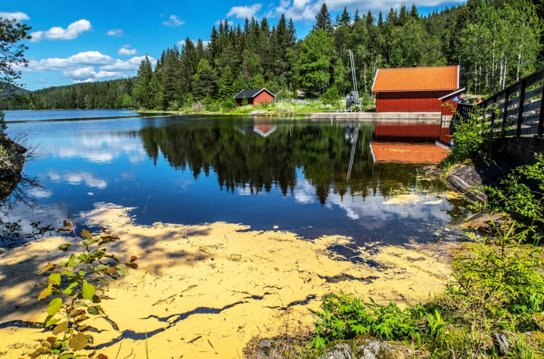 Skjærsjødammen i Nordmarka i Oslo. Drikkevannskilde. Foto: Halvard Alvik / NTB scanpix