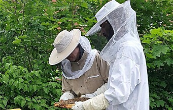 Frelsesarmeens Jobben høstet 400 kilo honning fra kuber på Grønland og Ensjø