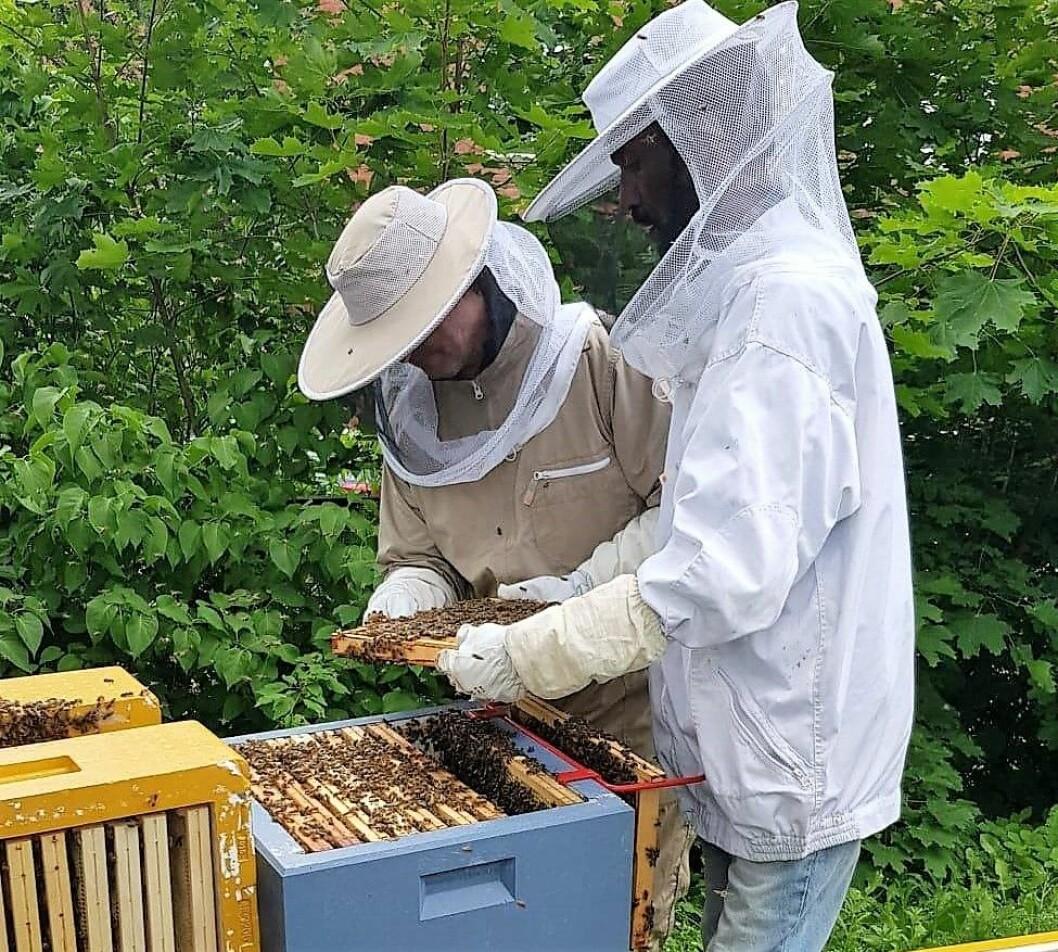 Deltakere på Frelsesarmeens Jobben i gang med å sanke honning. Nå er de kommet til finalen i honning-NM. Foto: Rune Mæhre / Frelsesarmeen