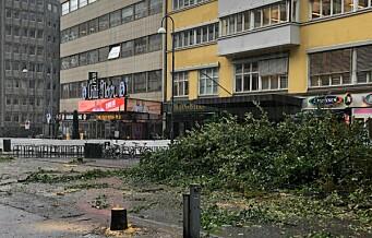 – Det er trist å felle trær, men av og til nødvendig. For eksempel i Olav Vs gate, for å etablere en flott gågate