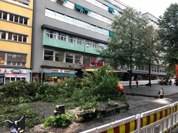 Anleggsarbeiderne er i full gang med å sage ned de gamle trærne i gata. Foto: VårtOslo