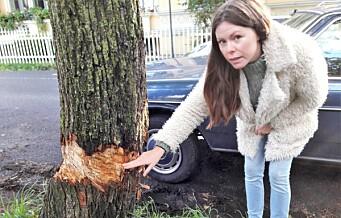 Trær på St. Hanshaugen er angrepet med øks eller machete på natta