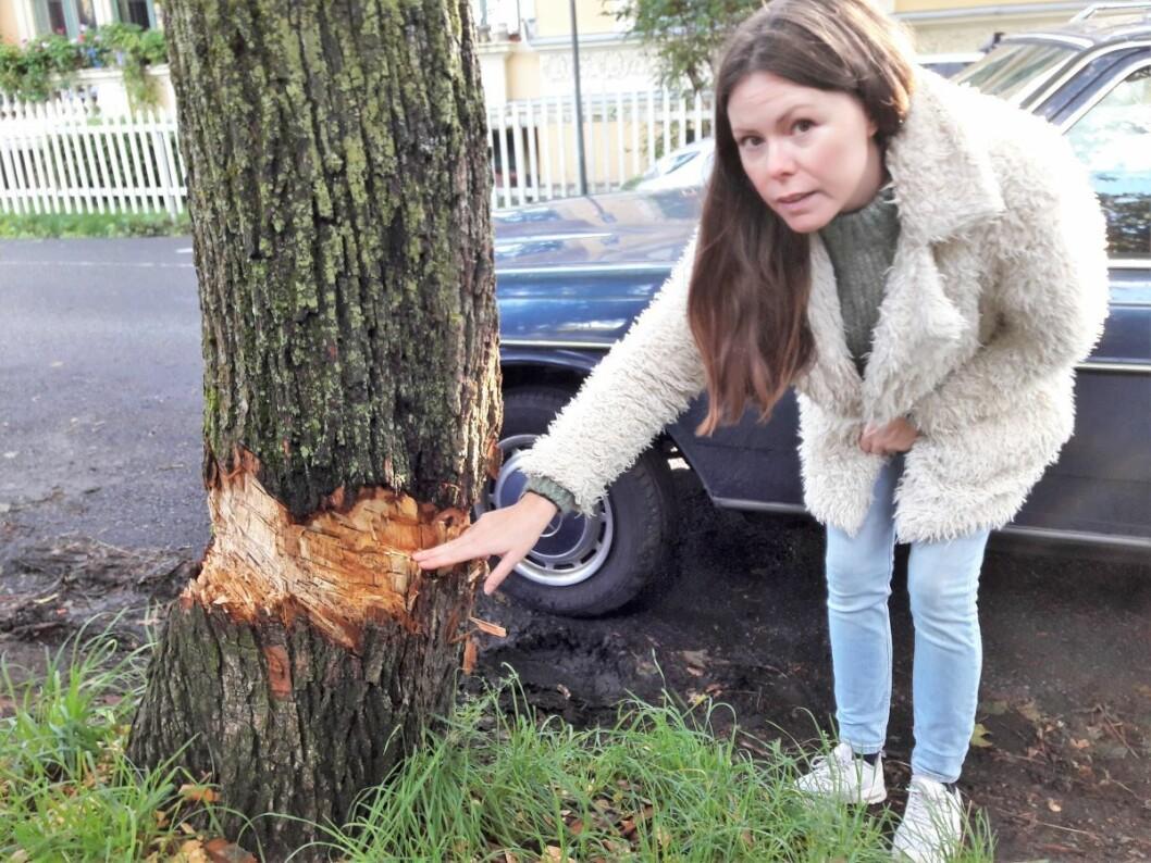 Dette treet overlever ikke skadene, og bør felles, sier ekspertene hos Bymiljøetaten. Sara Greer Middelthon Moe kan ikke fatte at noen vil angripe et tre på St Hanshaugen. Foto: Anders Høilund